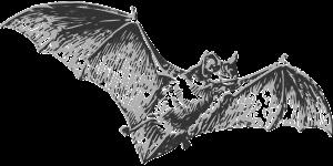 עטלף מצויר